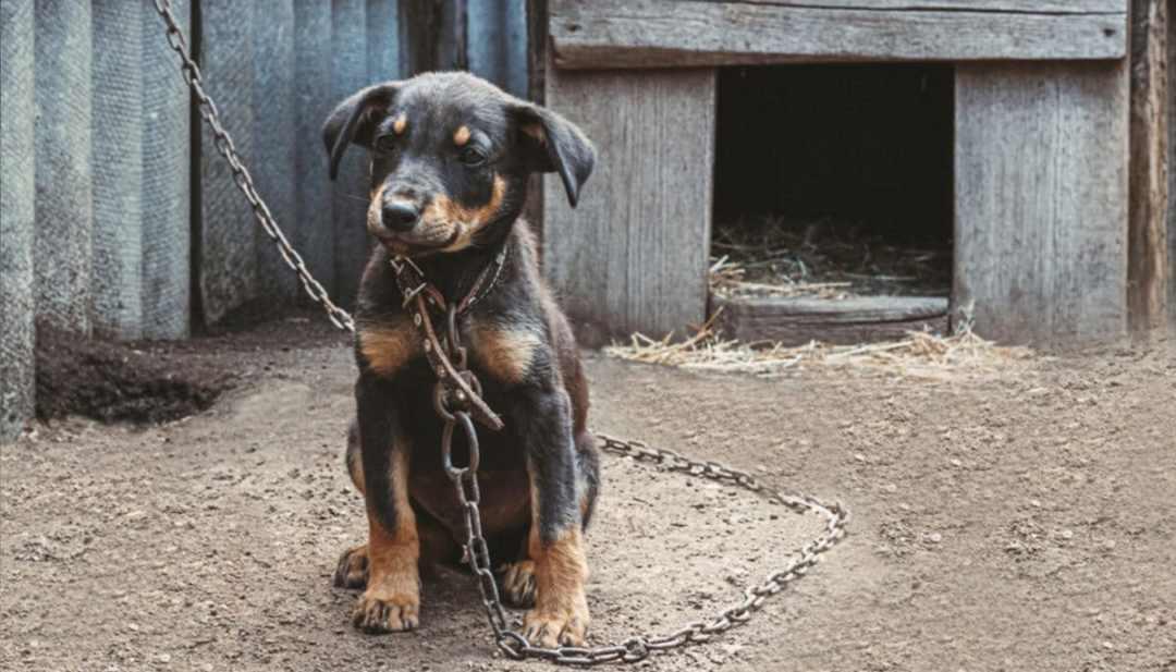 article maltraitance animal