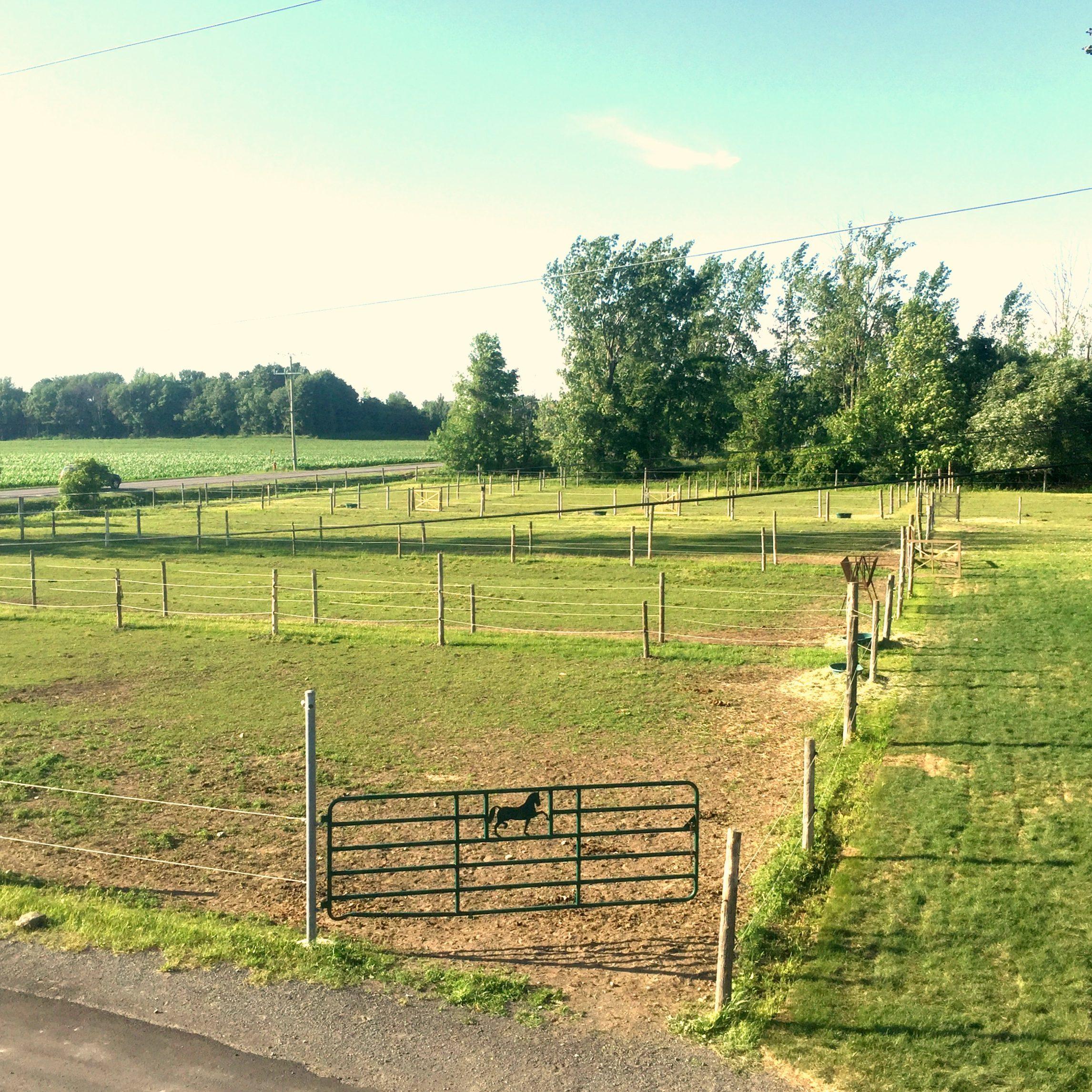 Plusieurs espaces de mise en liberté chevaux. Écurie en Montérégie.
