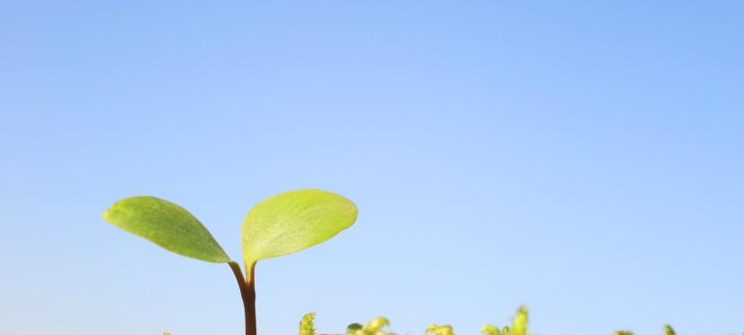 Les impacts de l'environnement sur la santé