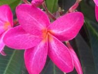 academy-devyn-picture-botanical-gardens-2-des-moines-field-trip