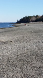 The Bar Island trail, which stretches from Bar Harbor to a small mountain, can only be hiked at low tide.