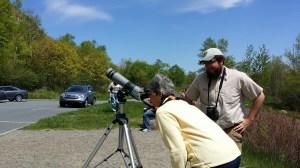 peregrine watch at Acadia National Park