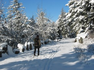 cross-country skiing in Acadia National Park
