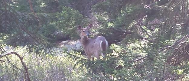 wildlife in acadia