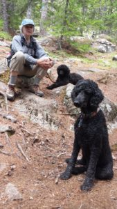 Dogs at Acadia National Park