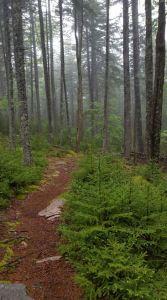acadia national park hiking