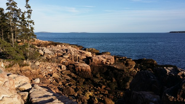 The Ship Harbor Trail in late spring in Acadia National Park