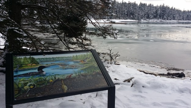 "The ""Mudflat Metropolis"" wayside exhibit is posted in the foreground along the shore of the snow-covered Ship Harbor in Acadia National Park."