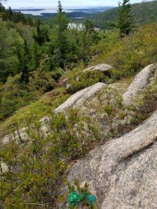 acadia national park vandalism