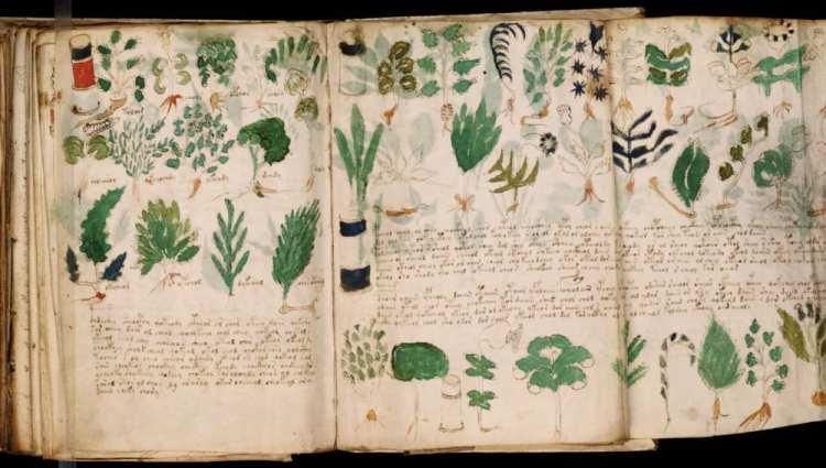 Vegetales insólitos: Tres historias ridículamente extraordinarias