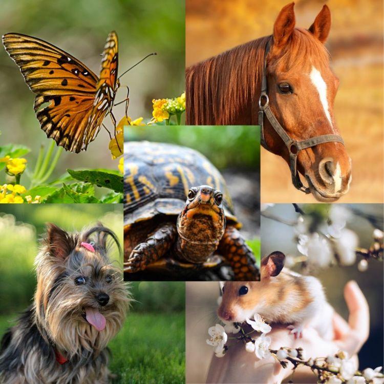 Los animales de mi vida