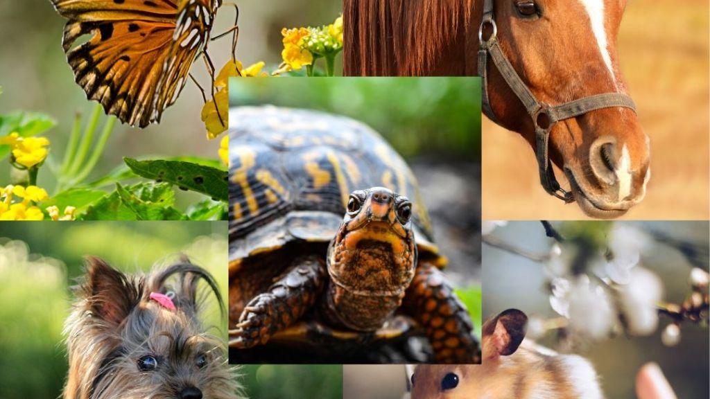 Animales de mi vida