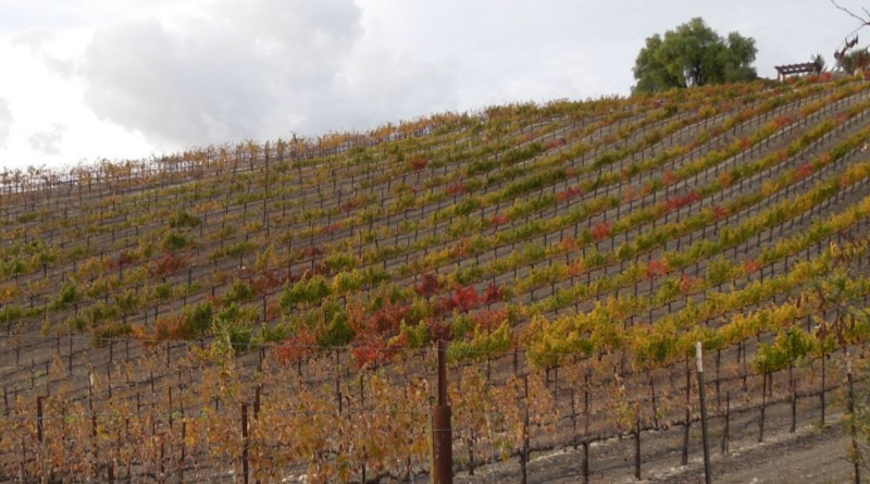 What It's Like to Live in Wine Country