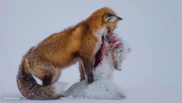 Wildlife Photographer of the Year (BBC & Natural History Museum)