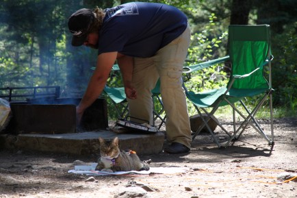 scrappers-the-camping-cat