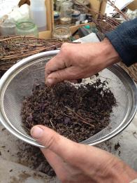 raetia-perilla-fruttescens-lavorazione