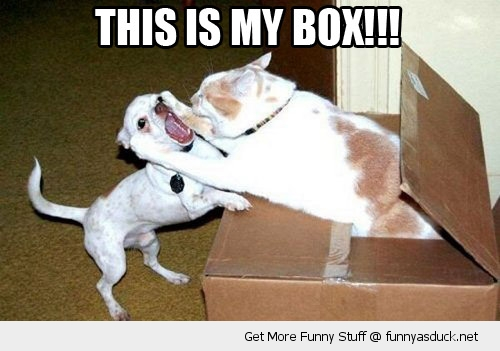 funny-my-box-cat-attacking-dog-pics