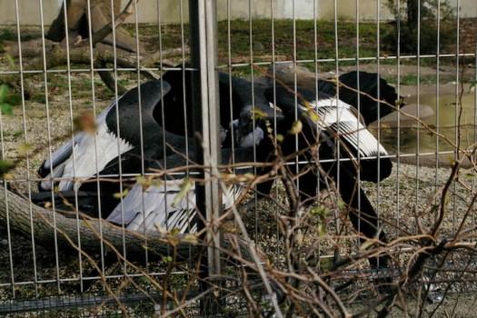 2016-04-28 Bird Pic 9