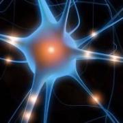 Dalle connessioni del cervello alla rete web