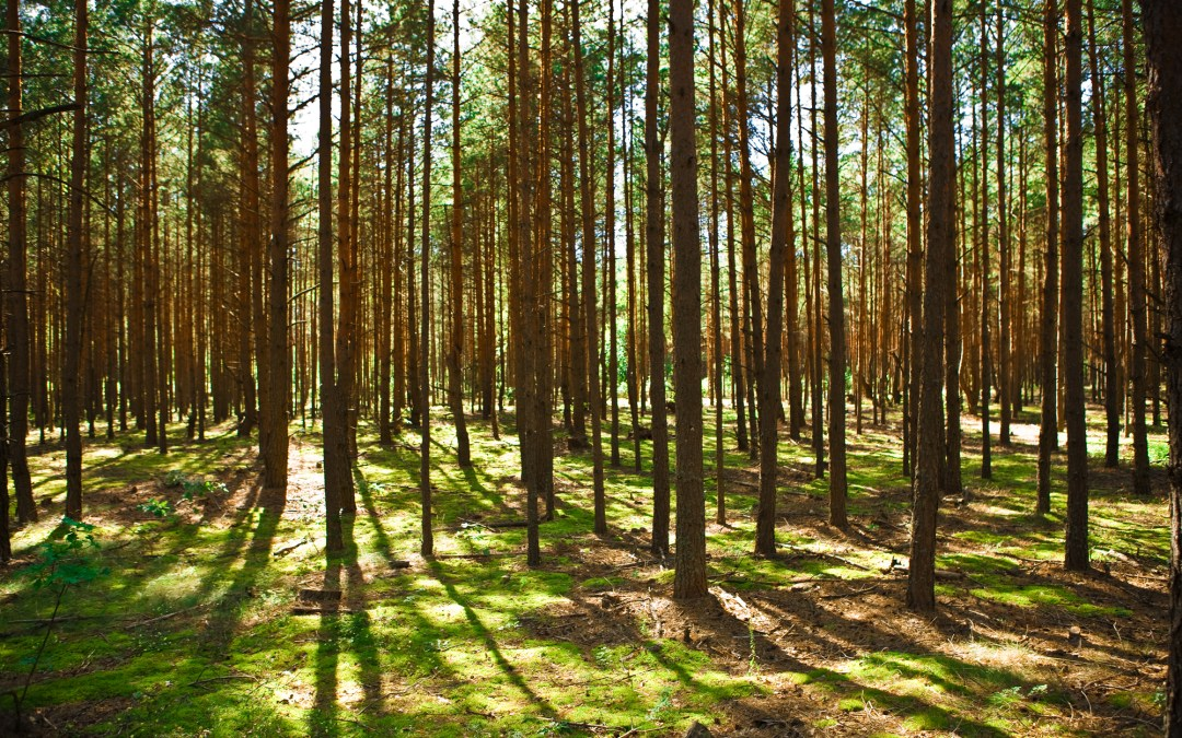 Myths About the Role of Carbon Offsets in Achieving Net Zero