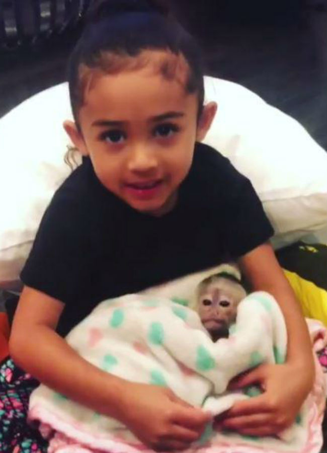 chris-brown-daughter-and-pet-monkey