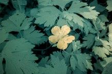 infra flower