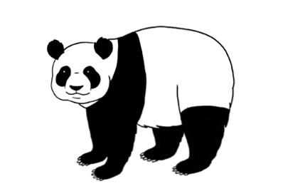 Comment Dessiner Un Panda Progressivement Design Et Illustration Developpement De Sites Web Jeux Informatiques Et Applications Mobiles