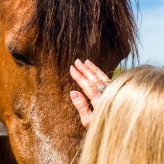 poder caballos ideal