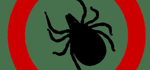 garrapata, enfermedad de Lyme, medicina etnobotánica