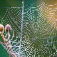 Constientizarea nevoii de acces la natura pentru toate categoriile sociale