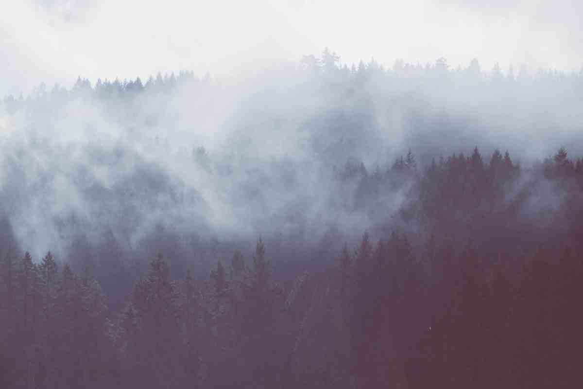 see through the fog