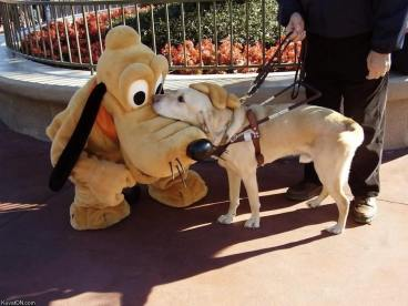 guidedog in disney park
