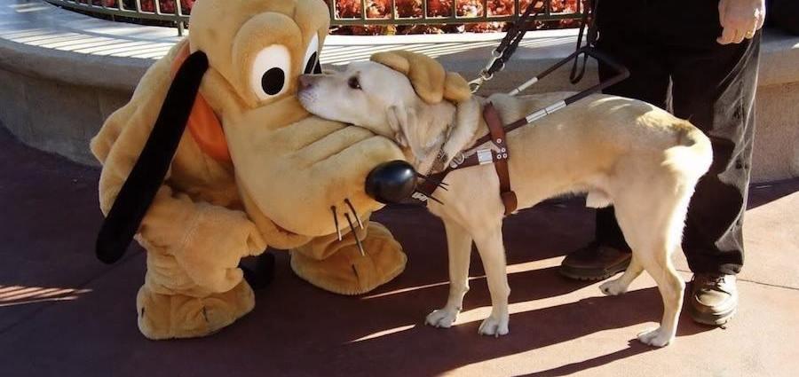 guide dog in disney park