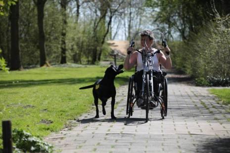International Assistance Dog Week