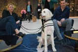 Assistance dog Noah