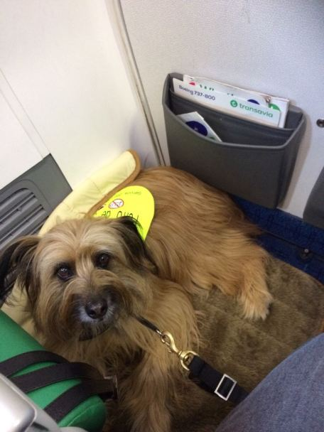 dog vest for assistance dogs