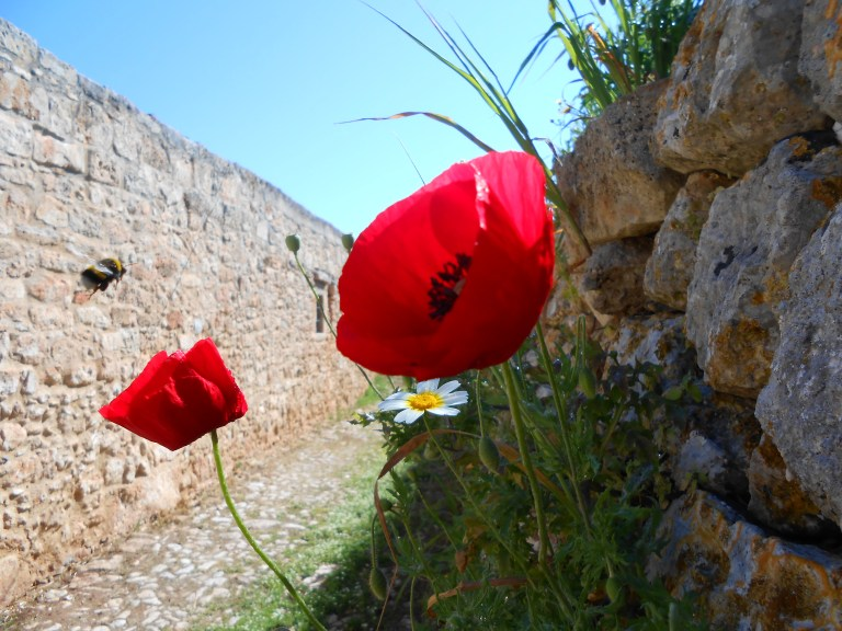 Crete guide accessible travel