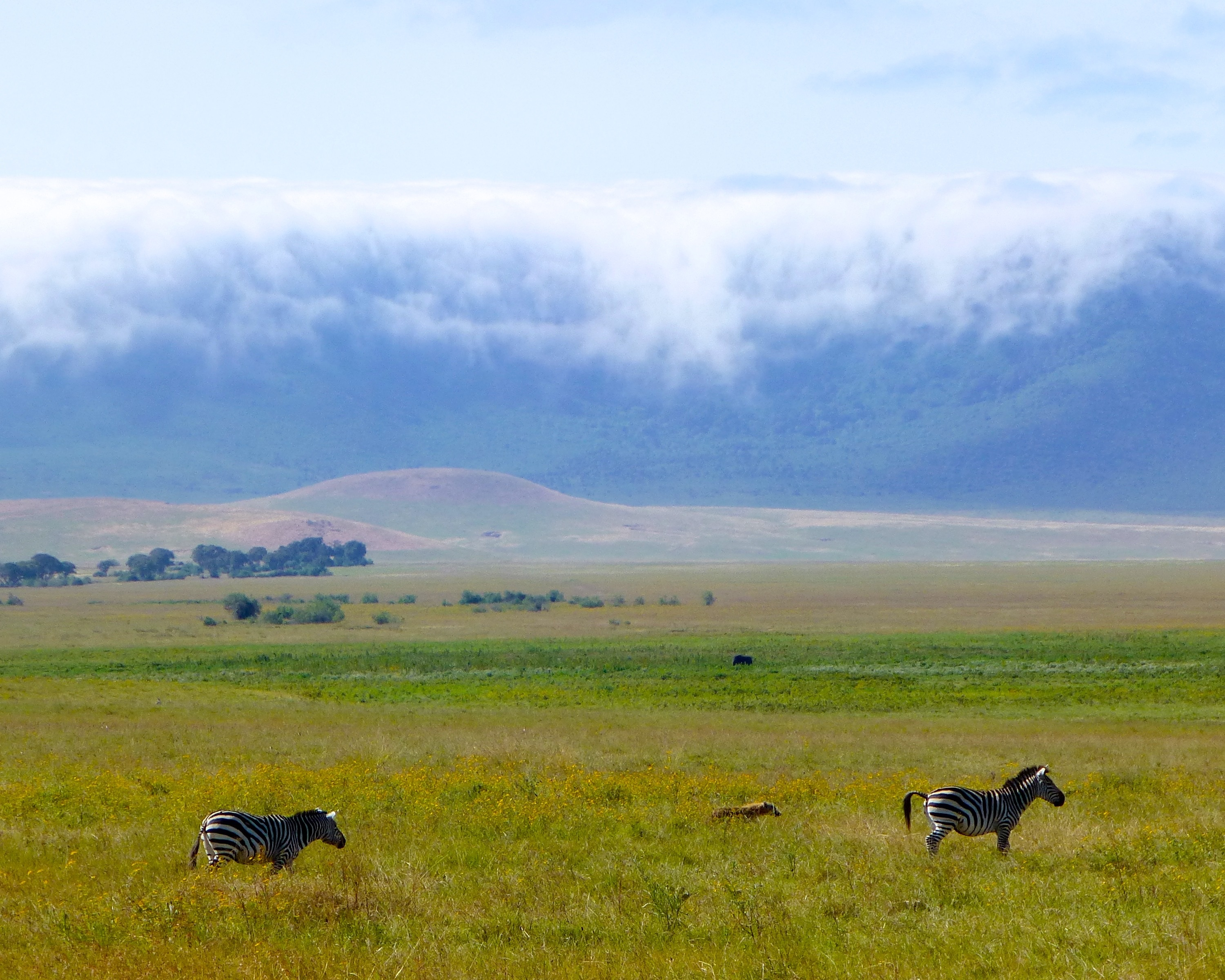 Unforgettable Ngorongoro accessible tour