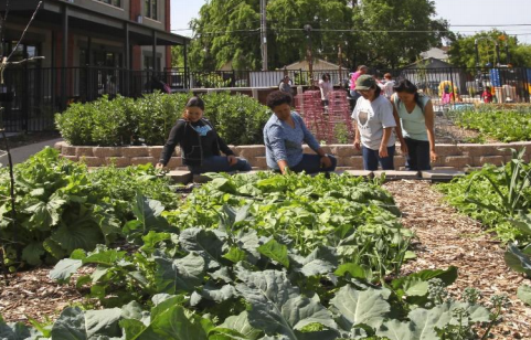 "Sac Food Bank ""Garden Day"" helps families gain green thumbs"