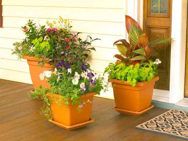 Flower Pot Ideas For Front Porch