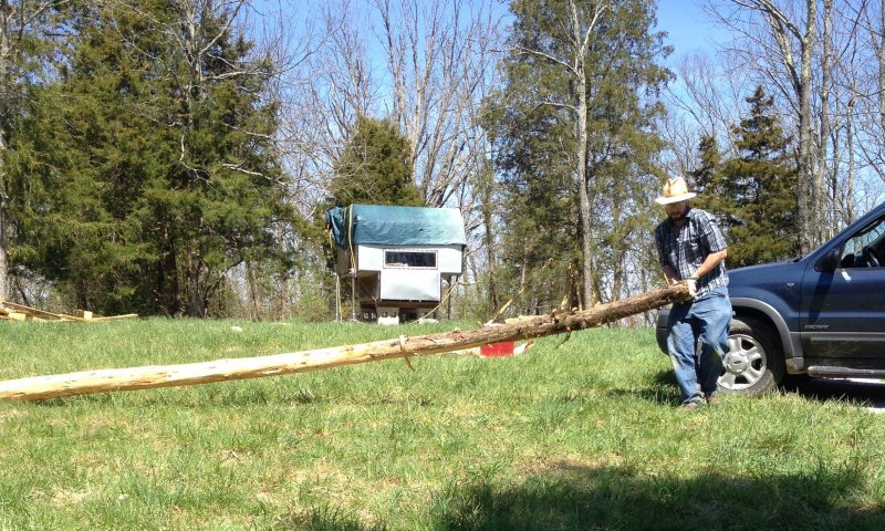 Moving a cedar tree to prepare it for cordwood masonry construction.