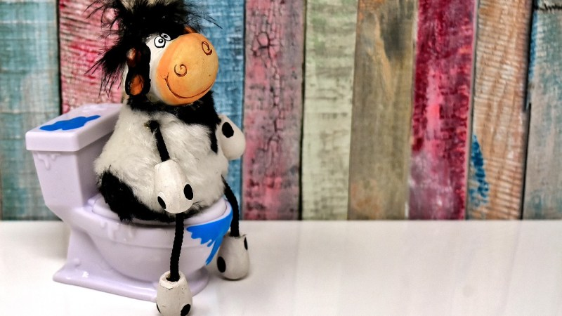 This is a pic of a smiling cow on a toilet with a coloured wooden background Pregnancy Related Bladder Problems