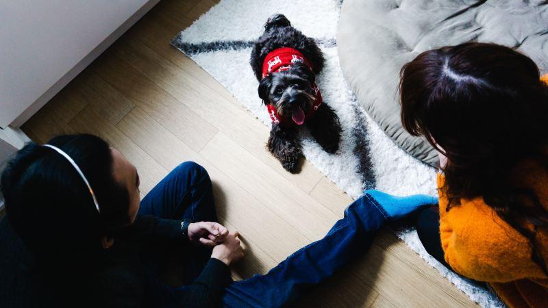 engineered wood flooring, rug, dog and people
