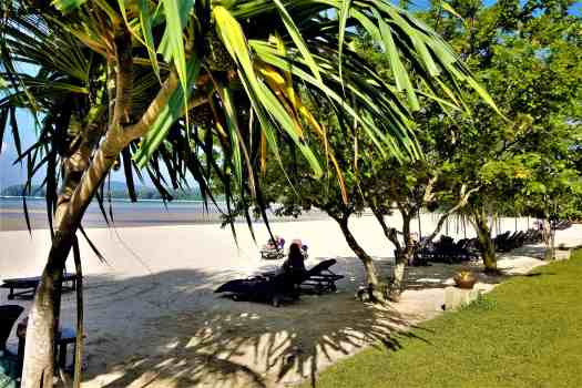 image-of-phuket-marriott-resort-nai-yang-beach-palm-trees