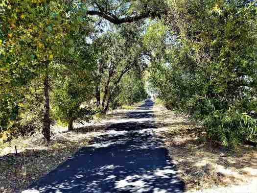 image-of-napa-valley-vine-trail-shady-section