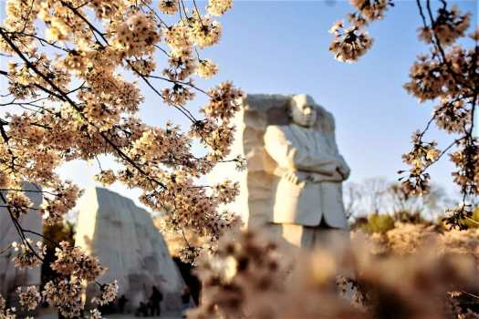mlt-memorial-with-cherry-blossoms-washington.org