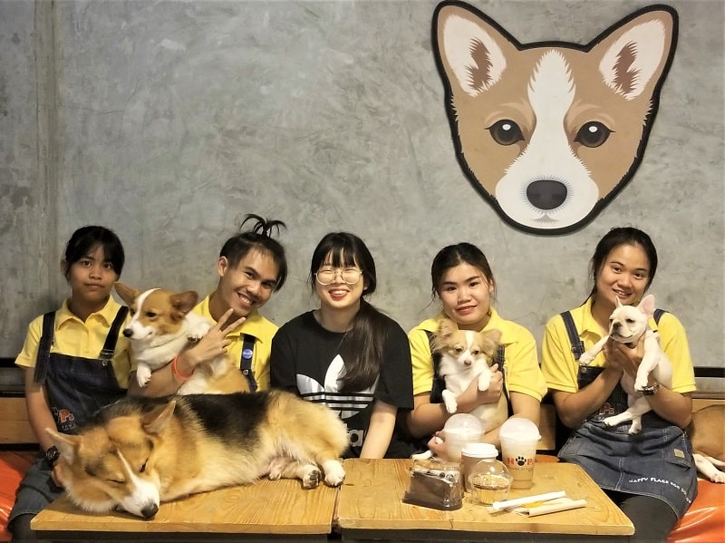 house-of-paws-staff-with-dogs