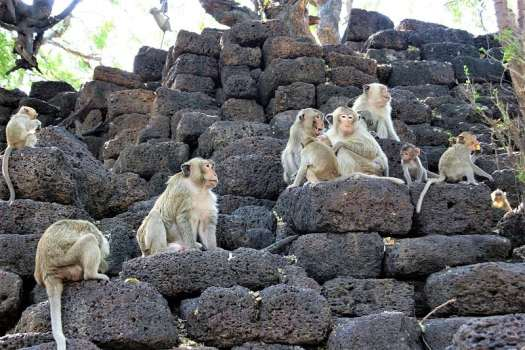 lopburi-long-tail-monkeys