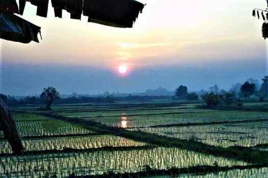 chiang-mai-sunrise-over-rice-paddies-ueber-reisfelder