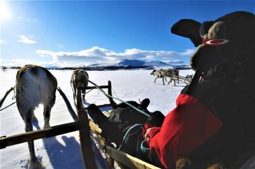 sweden-lapland--reindeer-rajd-Staffan Widstrand
